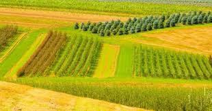 تهیه پلان اراضی کشاورزی توسط کارشناس رسمی دادگستری نقشه برداری